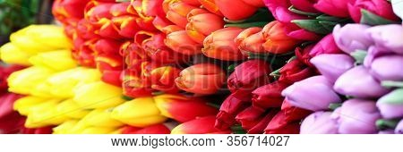 Close-up Of Large Bouquet Of Multicoloured Tulips. Bright And Sunny Photo. Bunch Of Spring Fresh Flo