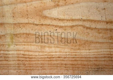 Douglas Fir, Pseudotsuga Menziesii, Tree Recently Sawn Timber Plank Without Knots And Showing The Gr