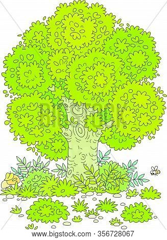 Big Branchy Oak Tree, Green Bushes, Grass And Mushrooms On A Pretty Forest Glade In Summer, Vector C
