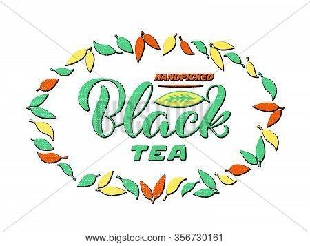 Vector Illustration Of Handpicked Black Tea Brush Lettering For Package, Banner, Flyer, Poster, Bist
