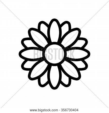Fragrant Chrysanthemum Icon Vector. Fragrant Chrysanthemum Sign. Isolated Contour Symbol Illustratio