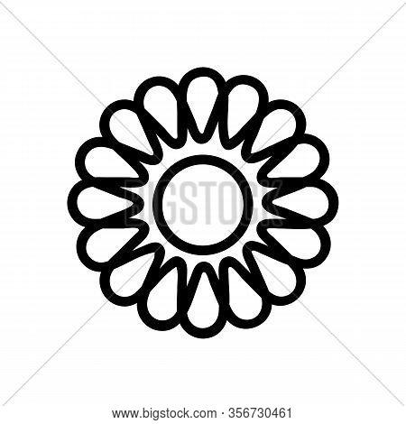 Beautiful Chrysanthemum Icon Vector. Beautiful Chrysanthemum Sign. Isolated Contour Symbol Illustrat