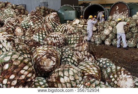 Harvesting Agave For Tequila Production. Agave Piles In Distillery Waiting For Processing, Tequila,