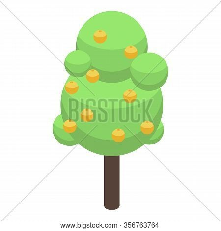 Apricot Tree Icon. Isometric Of Apricot Tree Vector Icon For Web Design Isolated On White Background