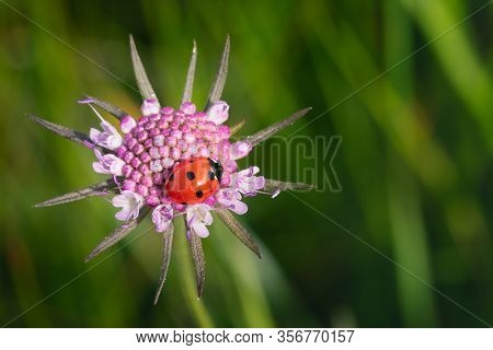 Wild Colorful Mountain Flowers With Nice Bokeh And Ladybird