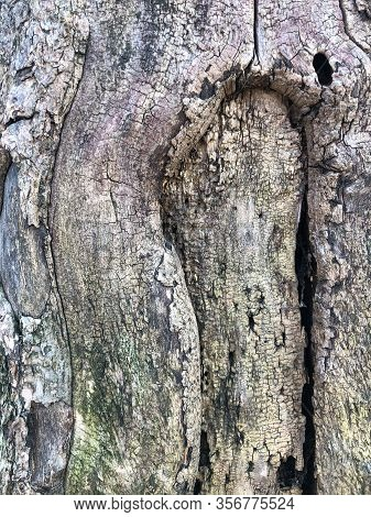 The Surface Of An Old Wrinkled Tree Trunk. Cracked Bark Of A Plant. Harmonious Embossed Wood Texture