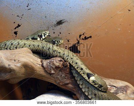 Snakes In The Vivarium - Ljubljana, Slovenia (slovenija)