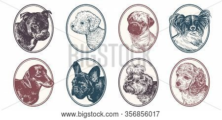 Portraits Of Animals In Frame Set. Pet Dogs And Puppies. Bull Terrier, Dachshund, Spitz, Bichon Friz