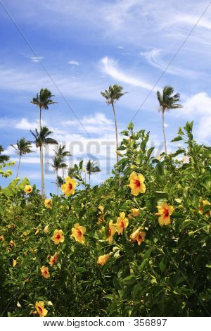 Guam Garden