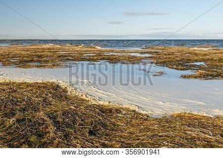 Algae On The Shore Of Lake Kamyslybas, Large Saltwater Lake In The Kyzylorda Region Of Kazakhstan.
