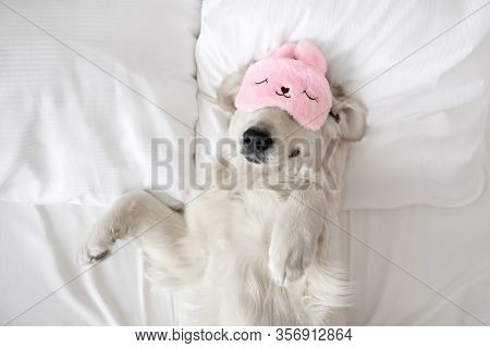 Happy Golden Retriever Dog In A Sleeping Mask Relaxing In Bed