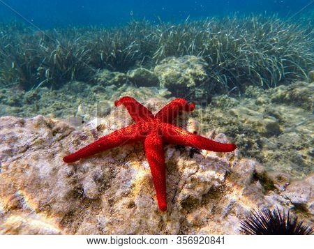 Red Starfish Lying On The Rocks - Underwater Life Off The Kastos Island Coast, Ionian Sea, Greece In