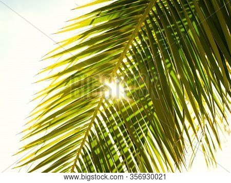 Palm Leaf Crossed By The Sun In The Form Of A Star In The Middle. Concept Of Summer.