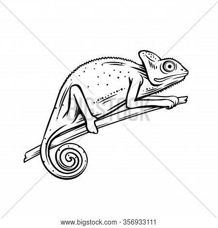 Chameleon Icon. Outline Badge Of Chameleon Animal For Zoo Design. Vector Illustartion.