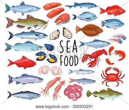 Seafood And Fish Icons. Lobster, Squid, Octopus, Mussel, Fish Salmon, Shrimp And Scallop. Tuna, Ster