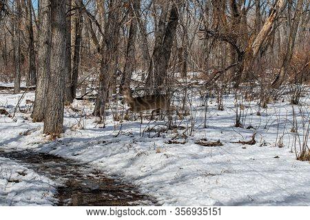 Herd Of Deer In A Snow Covered Field