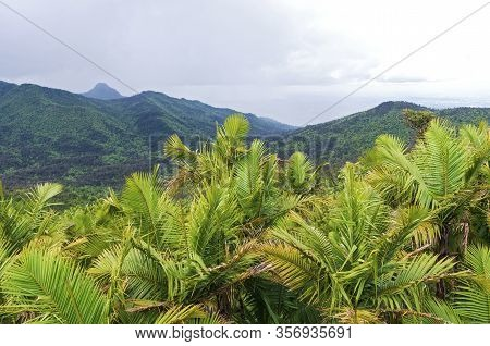 Mountain Peaks And Valleys Of El Yunque National Forest In Puerto Rico