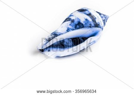 Shells, Aquamarine Light Blue Color Seashell On White Background With Blank Space For Text. Travel O