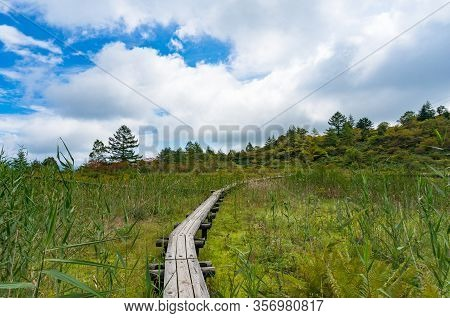 Wooden Elevated Hiking Footpath, Trek In The Forest. Environment Conservation, Protection. Kusatsu-s
