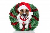 xmas dog with funny hat as santa poster