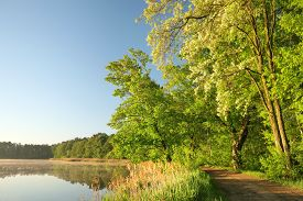 Oak trees lake water spring sun country rural road Nature background Nature landscape branch twig Nature background spring tree sunrise Nature background Nature background green leaves foliage Nature background travel Nature background Nature background.