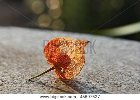 Dry Lampion
