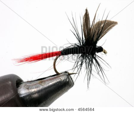 Freshwater Fly Closeup