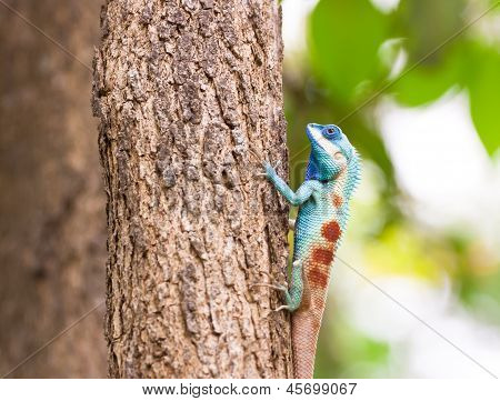 Lizard Sitting On The Tree