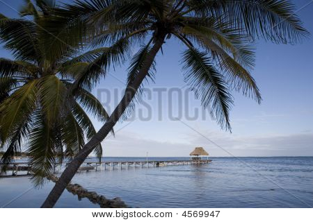Palms And Pier At Sunrise