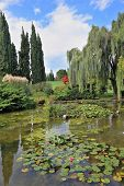 Fabulously beautiful Italian garden Sigurta. A pond with blossoming lilies. In the mirror of waters reflected cypress poster
