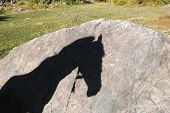 Shadow of a horse on the rock poster