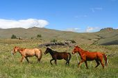 Three horses running through green argentinian countryside poster