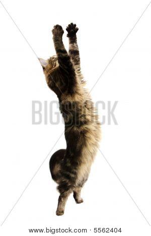 Catching Cat