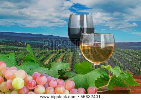 Red And White Wine In A Vineyard
