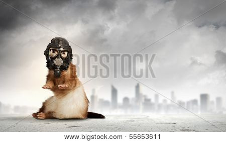 Image of ferret in gas mask. Ecology concept poster