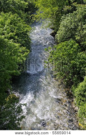 Stream through the forest