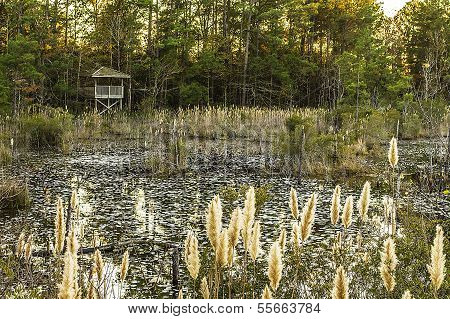 Lake And Forest Hunting Blind.