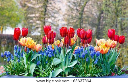 Multicolored Flowers On Spring Flowerbed.