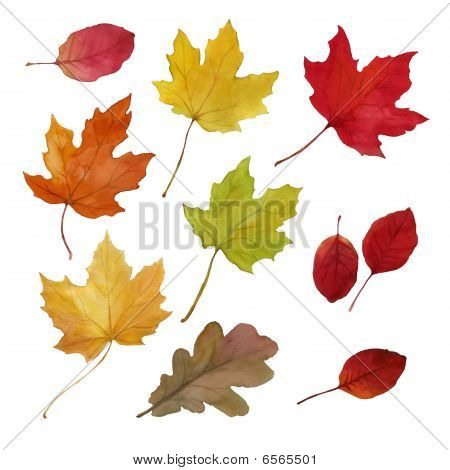 Autumn Fallen Leaves, Design Set
