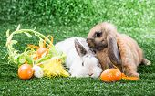 two rabbits on a green lawn with a basket of Easter eggs poster