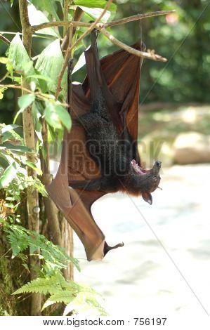 Fruit Bat 2