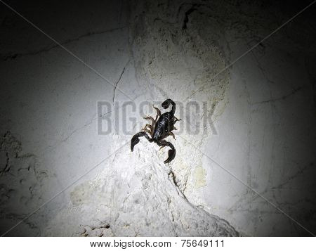 Scorpio on the wall of the cave.
