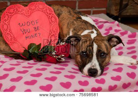 Valentine's Dog