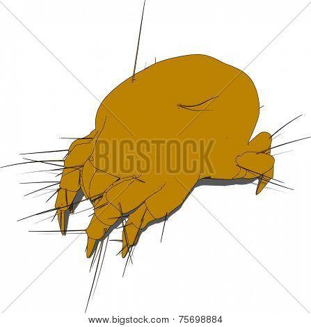 close up of a mite