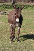 A donkey standing in a green pasture poster