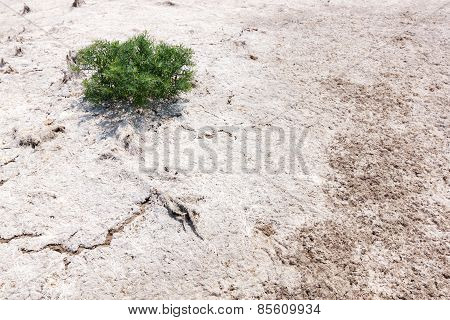 Single Tree On A White Land