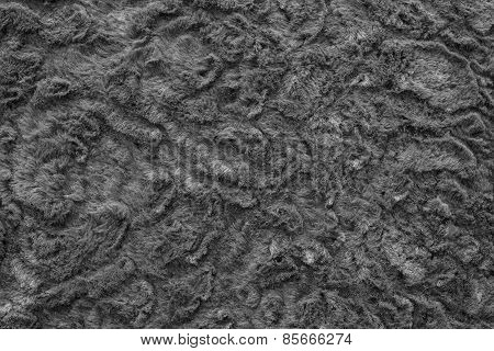 Texture Of Abstract Black-haired Fur Fabric