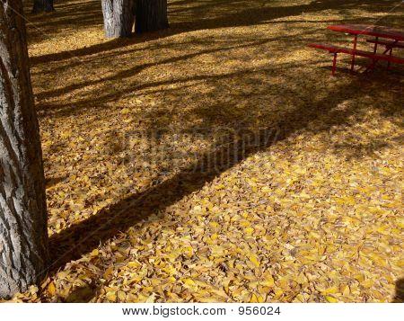 Park Floor