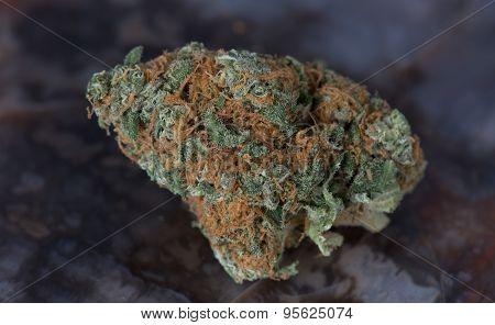 Blueberry Headband Medical Marijuana