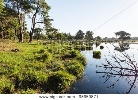Swampy Area With A Branch In The  Water